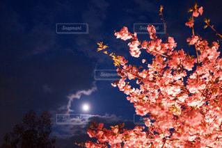 暗い空の木の写真・画像素材[886695]