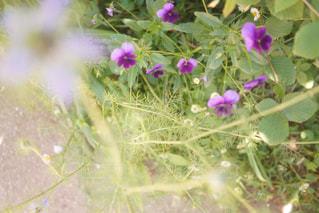 近くの花のアップの写真・画像素材[886697]