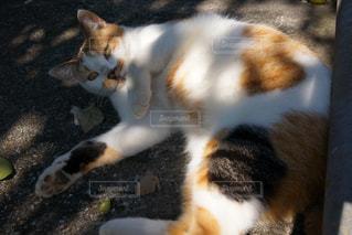 地面に横になっている猫の写真・画像素材[886893]