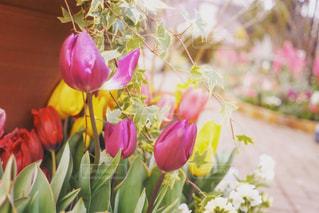 テーブルの上の花の花瓶の写真・画像素材[909489]