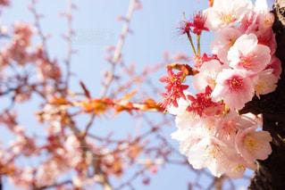 近くの花のアップの写真・画像素材[922181]