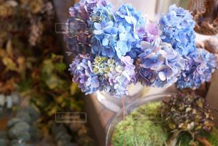 近くの花のアップ - No.922653