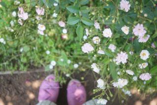植物にピンクの花 - No.922672