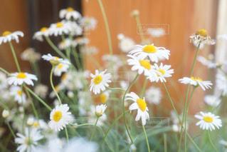 近くの花のアップの写真・画像素材[922673]
