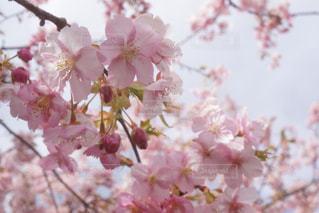 近くの花のアップの写真・画像素材[922818]