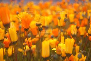 近くの花のアップ - No.922820