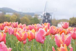 近くの花のアップの写真・画像素材[926456]