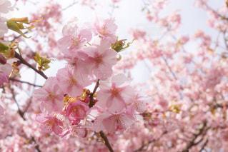 近くの花のアップの写真・画像素材[952046]
