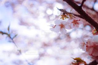 木のぼやけた写真 - No.952047