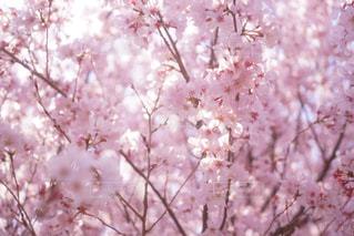 植物にピンクの花の写真・画像素材[1004964]