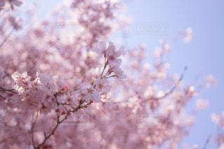 近くの花のアップの写真・画像素材[1004966]