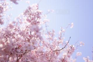 近くの花のアップの写真・画像素材[1004967]
