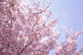 近くの木のアップの写真・画像素材[1004968]