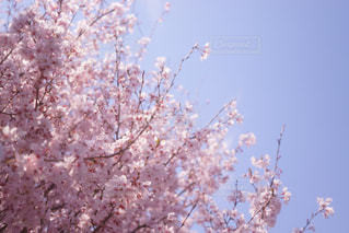 近くの木のアップの写真・画像素材[1004971]
