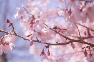 木の枝に花の花瓶の写真・画像素材[1004972]