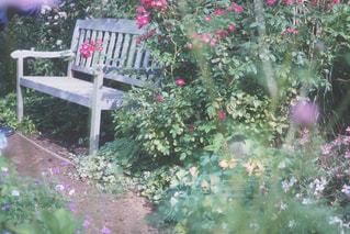 近くのフラワー ガーデンの写真・画像素材[1004986]