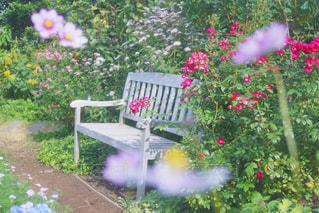 近くのフラワー ガーデンの写真・画像素材[1004987]