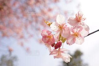 近くの花のアップの写真・画像素材[1024956]
