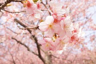 近くの花のアップの写真・画像素材[1024957]