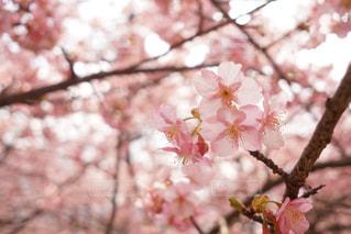 木の枝に花の花瓶の写真・画像素材[1024958]