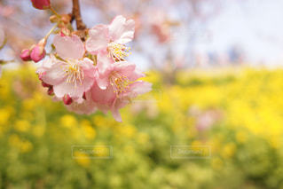 近くの花のアップの写真・画像素材[1024959]