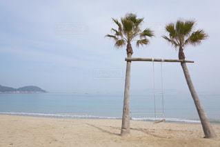 ビーチでヤシの木のグループの写真・画像素材[1056282]