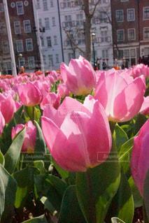 近くの花のアップの写真・画像素材[1056287]