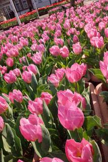 近くに紫の花の房のアップの写真・画像素材[1056288]