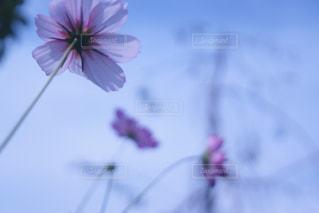 近くの花のアップ - No.1086986