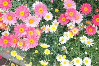 テーブルの上の花の花瓶の写真・画像素材[1132779]