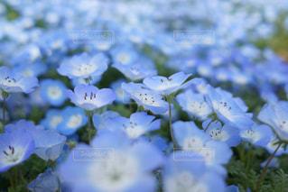 近くの花のアップの写真・画像素材[1132782]