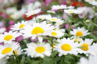 近くの花のアップの写真・画像素材[1136366]