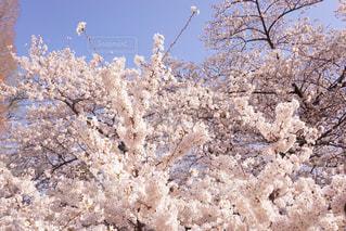 近くの木のアップの写真・画像素材[1158194]