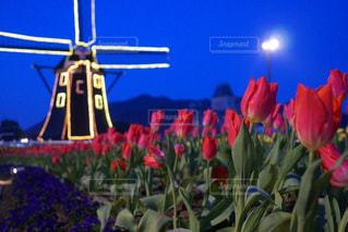 近くの花のアップの写真・画像素材[1173073]