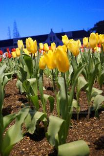 黄色の花の束の写真・画像素材[1173075]