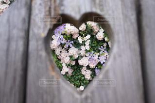 近くの花のアップの写真・画像素材[1189820]