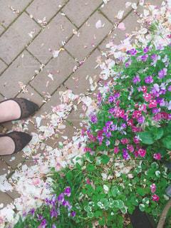 近くの花のアップ - No.1189836