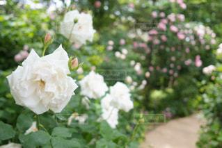 近くの花のアップ - No.1189837