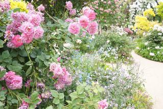 植物にピンクの花の写真・画像素材[1189843]