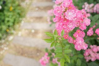 近くの花のアップの写真・画像素材[1209215]