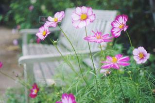 植物にピンクの花の写真・画像素材[1226959]