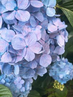 近くの花のアップの写真・画像素材[1266414]