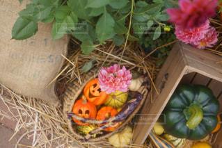 秋の写真・画像素材[1432464]
