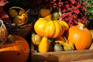 テーブルの上のオレンジのグループの写真・画像素材[1593385]