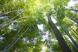 フォレスト内のツリーの写真・画像素材[1695941]
