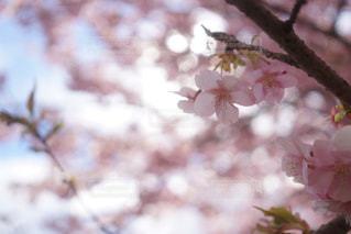 近くの花のアップの写真・画像素材[1758309]