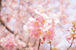 近くの花のアップの写真・画像素材[1866226]