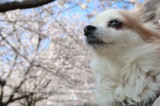 犬の写真・画像素材[2015260]