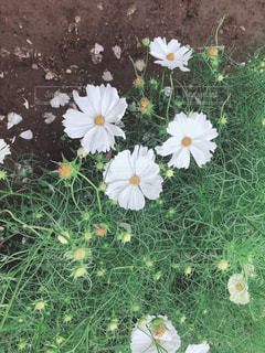 花の写真・画像素材[2676812]