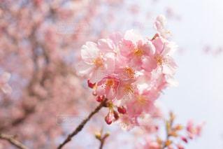 花をクローズアップするの写真・画像素材[2797077]